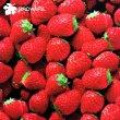 画像3: 20%off!!3RDWARE サードウェア★Strawberry イチゴ柄 レディースボクサーパンツ (3)